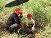 ccdc_alabang_tree_planting_at_nuvali_image_007