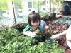 ccdc_alabang_fieldwork_atc_greenhouses_28