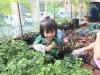 ccdc_alabang_fieldwork_atc_greenhouses_29