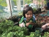 ccdc_alabang_fieldwork_atc_greenhouses_31