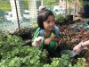ccdc_alabang_fieldwork_atc_greenhouses_32