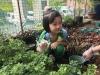 ccdc_alabang_fieldwork_atc_greenhouses_33