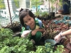 ccdc_alabang_fieldwork_atc_greenhouses_34