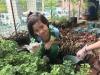 ccdc_alabang_fieldwork_atc_greenhouses_35