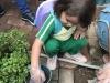 ccdc_alabang_fieldwork_atc_greenhouses_44