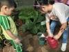 ccdc_alabang_fieldwork_atc_greenhouses_47