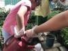 ccdc_alabang_fieldwork_atc_greenhouses_67