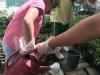 ccdc_alabang_fieldwork_atc_greenhouses_68