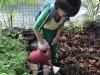 ccdc_alabang_fieldwork_atc_greenhouses_69