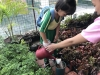 ccdc_alabang_fieldwork_atc_greenhouses_70