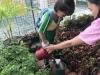 ccdc_alabang_fieldwork_atc_greenhouses_71