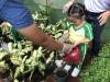 ccdc_alabang_fieldwork_atc_greenhouses_72