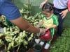 ccdc_alabang_fieldwork_atc_greenhouses_73