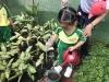 ccdc_alabang_fieldwork_atc_greenhouses_74