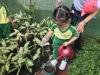 ccdc_alabang_fieldwork_atc_greenhouses_75