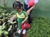 ccdc_alabang_fieldwork_atc_greenhouses_77