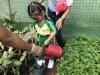 ccdc_alabang_fieldwork_atc_greenhouses_78