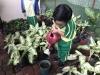 ccdc_alabang_fieldwork_atc_greenhouses_80