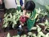 ccdc_alabang_fieldwork_atc_greenhouses_81