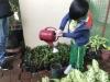 ccdc_alabang_fieldwork_atc_greenhouses_83
