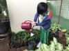 ccdc_alabang_fieldwork_atc_greenhouses_84