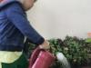 ccdc_alabang_fieldwork_atc_greenhouses_91