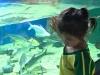 cambridge-preschool-alabang-ocean-park-trip-21