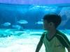 cambridge-preschool-alabang-ocean-park-trip-31