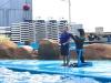 cambridge-preschool-alabang-ocean-park-trip-42