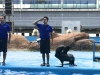 cambridge-preschool-alabang-ocean-park-trip-43