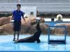 cambridge-preschool-alabang-ocean-park-trip-44