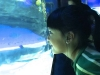 cambridge-preschool-alabang-ocean-park-trip-23
