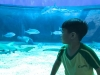 cambridge-preschool-alabang-ocean-park-trip-31