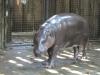 cambridge-banawe-avilon-zoo-06