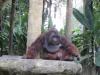 cambridge-banawe-avilon-zoo-07