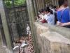 cambridge-banawe-avilon-zoo-08