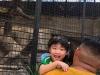 Cambridge Imus at Avilon Zoo 03