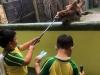 Cambridge Imus at Avilon Zoo 05
