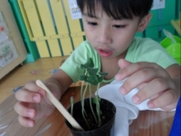 Growing Our Plants