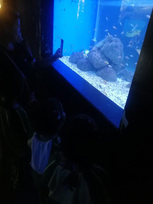 Fieldwork Activity at Manila Ocean Park 3