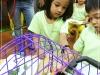 ccdc_shaw_pet_patrol_bunny_22